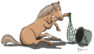 Dein Pferd - Sein Müesli